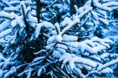Vintersnöjulgran 11 Royaltyfri Fotografi