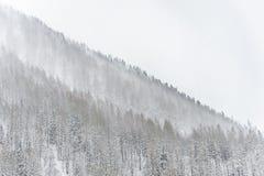 Vintersnöstormen som sopar över träd, täckte berget Royaltyfri Foto