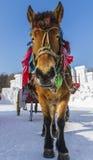 Vintersnövagn Royaltyfri Bild