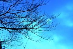 Vintersolbortgång till och med moln bak kala träd i Azure Sky fotografering för bildbyråer