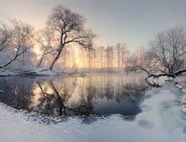 Vintersolen exponerar frostiga träd i morgonen royaltyfri fotografi