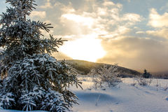 Vintersolnedgång Arkivbilder