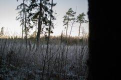 Vintersolnedgång från skogsikten, på fältet Otanki Lettland royaltyfri foto