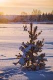 Vintersolnedgång i bygd solig afton Royaltyfri Bild