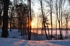 Vintersolnedgång i skog vid sjön royaltyfri fotografi