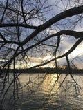 Vintersolnedgång i Washington DC Royaltyfria Bilder