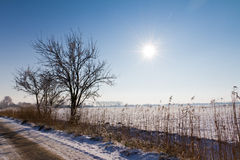 Vintersolsken royaltyfri foto