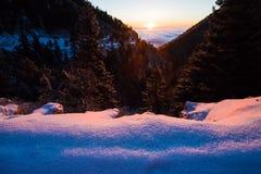 Vintersoluppgång med träd och mist arkivbild