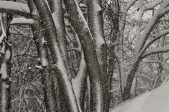 Vinterstorm i träna Arkivbild