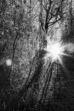 VinterSunburst arkivfoto