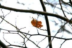 Vintertid, en i luft royaltyfria foton