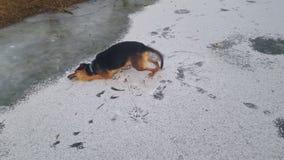 vintertid för en lycklig hund arkivfoton