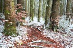 Vintertid inom skogen på en dimmig dag Arkivbilder