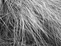 VintertidBeachgrass royaltyfri bild