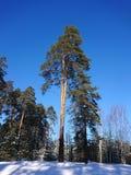 Vinterträd i snön under staden av Kazan arkivbilder
