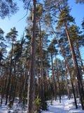 Vinterträd i snön under staden av Kazan fotografering för bildbyråer