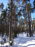 Vinterträd i snön under staden av Kazan arkivfoton