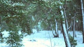 Vinterträ som täckas i snön lager videofilmer