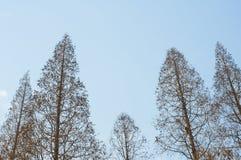 Vinterträd Royaltyfria Bilder