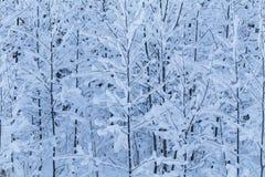 Vinterträd Royaltyfri Foto