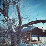 Vinterträd för år för snö för fågelbysol kallt nytt royaltyfri foto