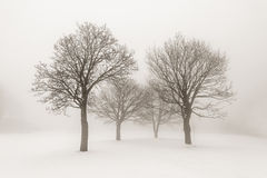 Vinterträd i dimma Fotografering för Bildbyråer