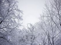 Vinterträd i en första snö på en ljus blå himmel Royaltyfri Fotografi