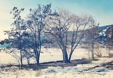 Vinterträd längs den djupfrysta sjön Fotografering för Bildbyråer