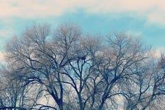 Vinterträd ljusa himmel och moln Royaltyfri Bild