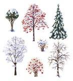 Vinterträd och buskar Royaltyfri Fotografi