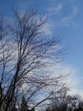 Vinterträd och vinterhimmel Arkivfoto