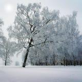 Vinterträd parkerar in royaltyfria bilder