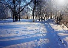 Vinterträd parkerar in arkivfoto