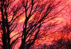 Vinterträd silhouetted mot livlig solnedgånghimmel bakgrundste Royaltyfria Bilder