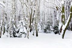 Vinterträd som täckas med insnöat skogen. Arkivfoton