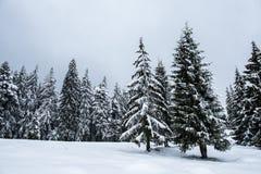 Vinterträd som täckas med ny snö fotografering för bildbyråer