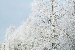 Vinterträd under snö, naturlig bakgrund Arkivbild