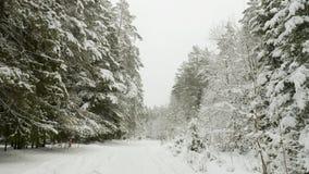 Vinterträd under snön som flyger skottet i skogen stock video
