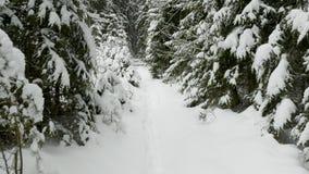 Vinterträd under snön som flyger skottet i skogen lager videofilmer