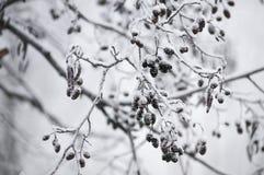 Vinterträdet Fotografering för Bildbyråer