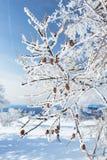 Vinterträdfilial Royaltyfri Fotografi