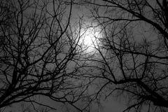 Vinterträdfilialer och dold fullmåne för moln Arkivfoto