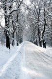 Vinterträdkorridor Arkivbild