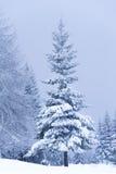 vinterträn fotografering för bildbyråer