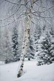 Vinterträn royaltyfri bild