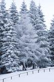 Vinterträn royaltyfri foto