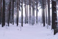 Vinterträn Arkivfoto