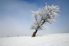 Vintertree Royaltyfria Bilder