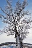 Vintertree fotografering för bildbyråer