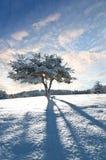 Vintertree Arkivfoto